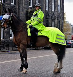 Police Horse with reflective quarter sheet