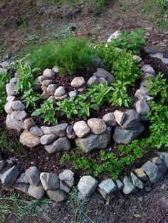 herb spiral garden ... hmmm , def something to do with all the rocks we have ;p