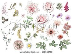 Set watercolor elements of rose, collection garden and wild flowers, leaves, branches, illustration isolated on white background, eucalyptus, bud, exotic leaf, butterfly.