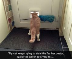 Funny Animal Pictures - View our collection of cute and funny pet videos and pics. New funny animal pictures and videos submitted daily. Funny Cat Photos, Funny Pictures, Funny Images, Funniest Pictures, Daily Pictures, Random Pictures, Catsu The Cat, Funny Animals, Cute Animals