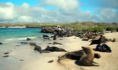 Galapagos oh-the-places-you-ll-go