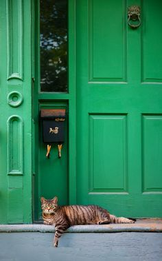 trendy Ideas for cats aesthetic green Crazy Cat Lady, Crazy Cats, Gatos Cats, Cat Aesthetic, Aesthetic Green, Domestic Cat, Green Day, Green Girl, Cat Love