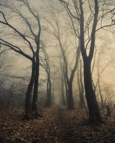 Pathway in the Creepy, Foggy Woods. Nature Photography.