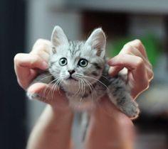 Cute? cute? lol  LOVE CATS