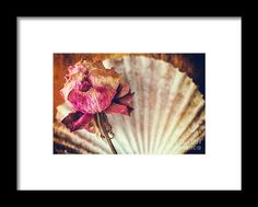 Wilted Rose And Shell Framed Print by Silvia Ganora #prints #rose