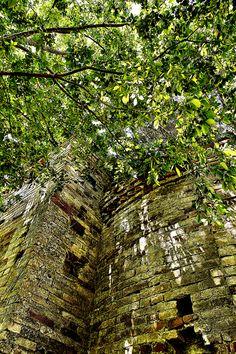 Il muro esterno del rudere, a contatto con la vegetazione