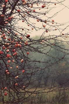 Autumn aesthetic - Autumn Apples on a BareBranched Tree Winter Trees Branches Nature Photography Red Fruit Crab Apples Warm Orange Reddish Tones and Colour Color against a Cool Background Landscape Photo Night Photography, Landscape Photography, Photography Tips, Fall Nature Photography, White Photography, Apple Orchard Photography, Professional Photography, Digital Photography, Apples Photography