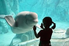 Beluga whale smiling at young girl. Cute animal pictures and happy feel good pictures. Steve jobs and bob marley quotes - adorable animals, bulldog Sup Girl, Photo Voyage, We Are The World, Ocean Life, Marine Life, Sea Creatures, Under The Sea, Animal Photography, Inspiring Photography