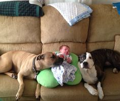 Pit Bull attack!!!  Too much lovin' going on!!