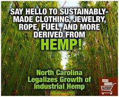 NC legalizes industrial hemp - from March against Monsanto