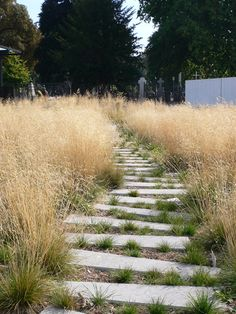 Tall grasses with simple path