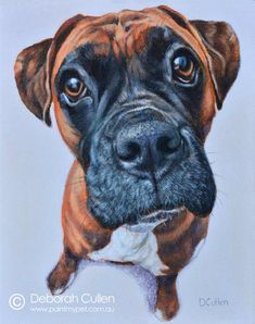 """DOG PORTRAIT Buddy – Boxer Acrylic on Canvas, x x Private Commission, Jessica (Subiaco, WA) Buddy - Boxer dog """"Playful, loving and still thinks he's puppy sized when he tries to sit on you"""". """"I recieved your package today. Boxer Dogs, Dog Quotes, Dog Portraits, My Animal, Dog Art, Drawing Ideas, Watercolor Paintings, Sketches, The Incredibles"""