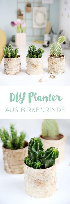Kreative DIY Idee: Selbstgemachter Planter für Kakteen aus Birkenrinde und alten Konservendosen