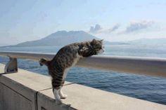 I just love cats. :-)