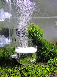 73 best axolotl ideas images axolotl aquarium aquariums