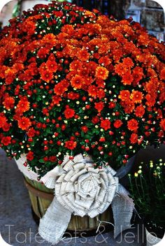 """Fall - love this time of the year and """"bushels of  baskets"""" filled with mums...note the flower bow made from burlap..."""