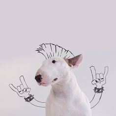 Bull Terrier Continues to Interact with Owner's Whimsical Doodles on Instagram - My Modern Met
