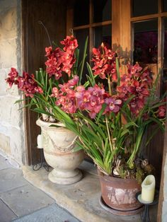 Orchids in anduze and terra cotta pots - the ones down in SBar just need some food and water!