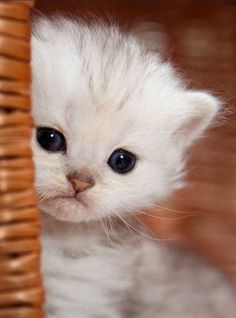 Extremely Cute Kitten - Click to see loads of great pictures of cats and kittens to brighten your day. ** Check out this great article. #cattips #kittencare