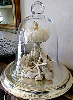 Seashells and white pumpkin under a cloche...beach cottage fall decor.