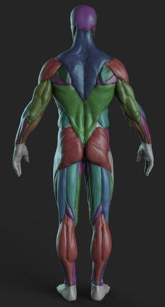 Drawing Human Anatomy to drawing human Drawing Human Anatomy Zbrush Anatomy, Human Anatomy For Artists, 3d Anatomy, Human Anatomy Drawing, Human Body Anatomy, Anatomy Sketches, Human Figure Drawing, Anatomy Poses, Muscle Anatomy