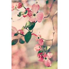 Pink Flowers' is a fine art canvas print from the Marmont Hill Art Collective…