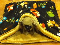 Dog bed cuddle sack. Premium Fleece and Minky Faux by FortunesPet