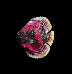 Rainbow Tourmaline -- Contemporary