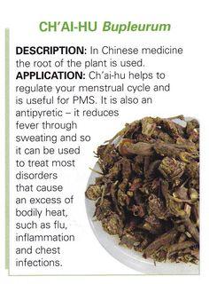 Chinese herb - CH AI HU - Bupleurum