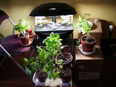 41 Best Basement Greenhouse Images Indoor Garden Indoor 400 x 300