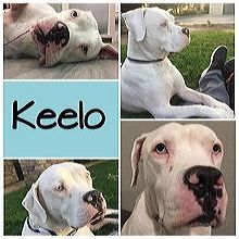 New Jersey American Bulldog Rescue Adoptions Rescue Me American Bulldog Rescue American Bulldog Big Puppies