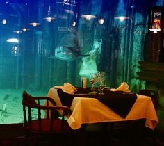Dining with the sharks: Cargo Hold restaurant in Durban, South Africa Come Dine With Me, Going On Holiday, Africa Travel, My Dream, Places To See, South Africa, To Go, African, Adventure