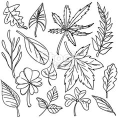 http://i.istockimg.com/file_thumbview_approve/15795596/2/stock-illustration-15795596-leaf-collection-in-black-and-white.jpg