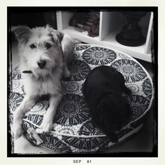 Sam and Jones, doing what dogs do best