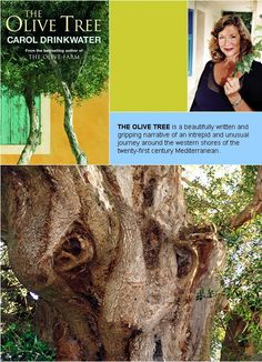 The Olive Tree, a follow-on to The Olive Route, by Carol Drinkwater
