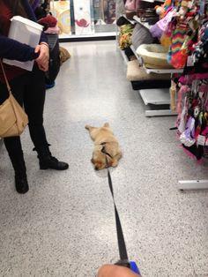 Allez magasiner avec votre chien qu'ils disaient, ça va être cute qu'ils disaient.