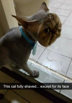 150 Funny Animal Snapchats Pictures – Funnyfoto | Funny Pictures - Videos - Gifs - Page 25 #FunnyCatPhotos