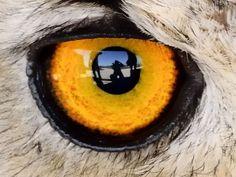 goldene Iris Beautiful Eyes, Animals Beautiful, Look Into My Eyes, Human Eye, Eye Photography, Tier Fotos, Beauty Hacks Video, Fauna, Beauty Art