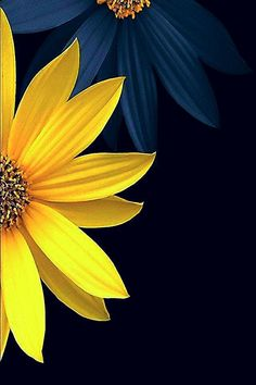 Ideas Flowers Background Iphone Photography Daisies For 2019 J5 Wallpaper, Cellphone Wallpaper, Flower Wallpaper, Wallpaper Backgrounds, Iphone Wallpaper, Trendy Wallpaper, Colorful Flowers, Beautiful Flowers, Flowers Nature