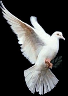Dove/Pigeon:  Power Animal  Symbol of Peace  Love  Maternity  Gentleness  Spirit Messengers   Dove/Pigeon's gifts include - bringer of peace and love, understanding of gentleness, spirit messenger, communication between the two worlds, maternity, femininity, prophecy. he Dove represents peace of the deepest kind.soothes, quiets our worried and troubled thoughts, enables us to find renewal in the silence of mind. In moments of stillness we are able to appreciate the simple things in life.
