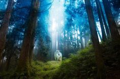 Unicorn in Forest