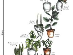 A Pair & A Spare | 5 Questions to Help you Choose the Right Indoor Plants (so They Actually Live)