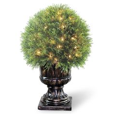National Tree LCY4-304-27 Upright Juniper Ball Topiary Tree in a Decorative Urn with 70-Clear Lights, 27-Inch -- Click image to review more details.