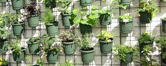 Resultado de imagem para paredes vivas horta