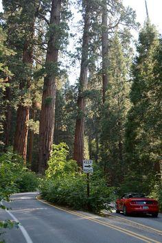 Sequoia National Park God S Creation Beautiful Places In California Sequoia National Park California California National Parks