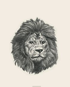 animal photo collection for Animal + All Animals Photos, Animals Images, Mexican Sombrero Hat, Flashcards For Kids, Animal Cards, Stuffed Animals, Lion, Draw, Pictures