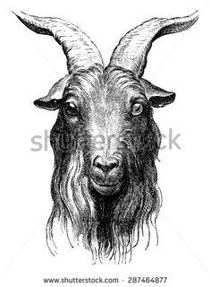 stock-vector-goat-vintage-engraved-illustration-earth-before-man-287464877.jpg (346×470)