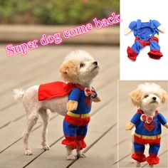 Look, Up in the Sky....its Super Dog! I love this costume! The Super Hero wraps around your dog's neck and the paws go into the pants legs so when your dog walks, it looks like the Super Hero is walking. There's a red cape to tie around your dog's neck. Its really cute. Size Neck size Shoulder Height Cape Weight XS 17-21cm 16.5cm 14cm 0-2kg S 21-24cm 20cm 14.5cm 2-3kg M 28-32cm 23.5cm 20cm 3-4kg L 29-33cm 28cm 20cm 4-6kg XL 30-36cm 32cm 26cm 6-9kg