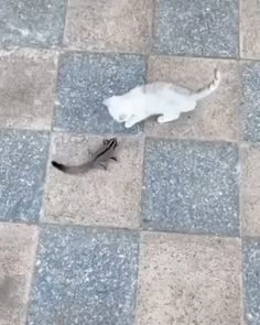 Kitty and sugar glider playing. - Happy Happy Joy Joy - Kitty and sugar glider playing. Cute Little Animals, Cute Funny Animals, Cute Cats, Funny Cats, Cute Animal Videos, Funny Animal Pictures, Animal Memes, Kittens Cutest, Animals Beautiful