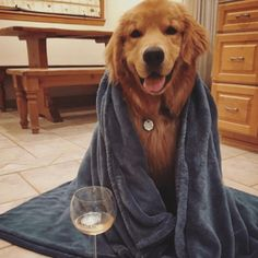 Use these 10 INSANELY easy tips for a happy Golden!